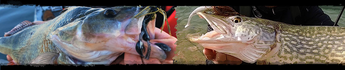 Fishus Lures : Soft Lures